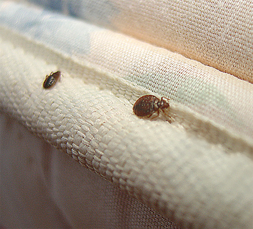 Powerful bed bug control