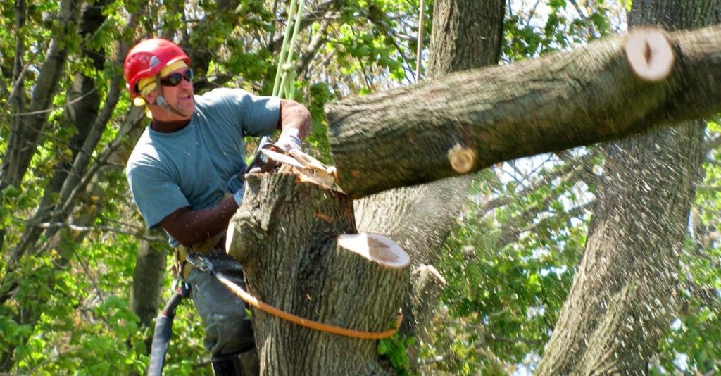 best tree evacuation administrations